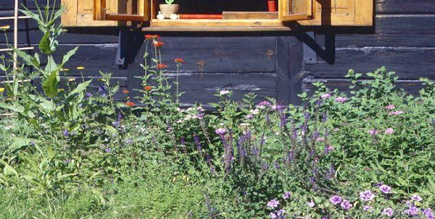 Rośliny przy domu letnim