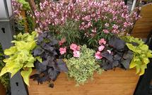 Wiosenne kwiaty na balkonie. Jakie rośliny sadzić, by ozdobić balkon na wiosnę?