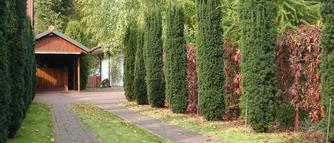 Czy można usunąć drzewo utrudniające dojazd do garażu?