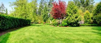Jak dbać o trawnik podczas upałów? Podlewanie i pielęgnacja trawnika latem