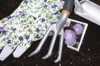 Rozsada kwiatów jednorocznych. Poradnik, jak zrobić rozsadę?